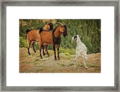 A Shared Interest  Framed Print by Flying Z Photography By Zayne Diamond