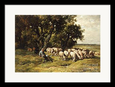 Shorn Sheep Framed Prints