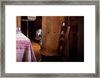 A Shy Guardian Framed Print by Patrick  Flynn
