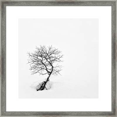 A Simple Tree Framed Print by Dave Bowman