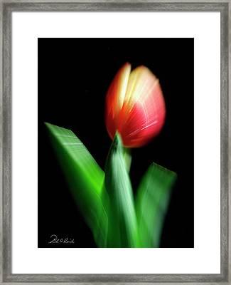 A Single Bloom Framed Print by Frederic A Reinecke