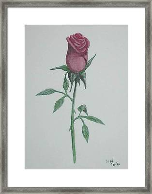 Framed Print featuring the painting A Single Red Rose by Hilda and Jose Garrancho