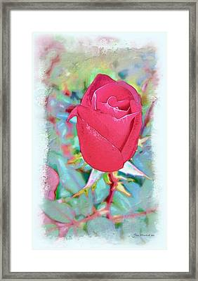 Framed Print featuring the photograph A Single Rose In October by Joan  Minchak