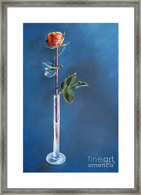 A Single Rose Framed Print by Sabina Haas