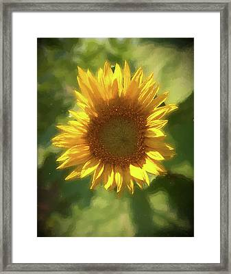 A Single Sunflower Showing It's Beautiful Yellow Color Framed Print
