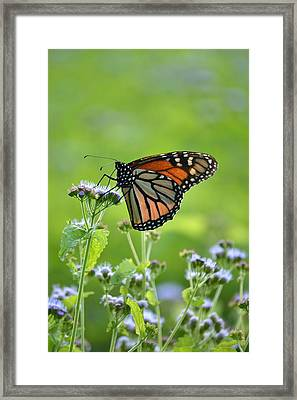 A Sip Of Mist Framed Print