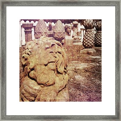 A Sleeping King Framed Print by JAMART Photography