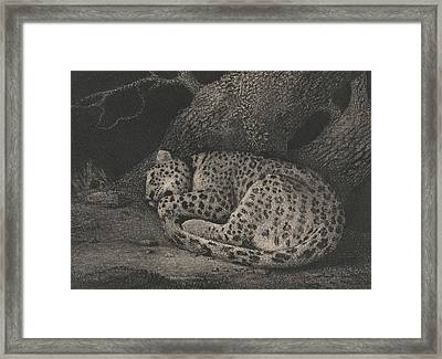 A Sleeping Leopard Framed Print