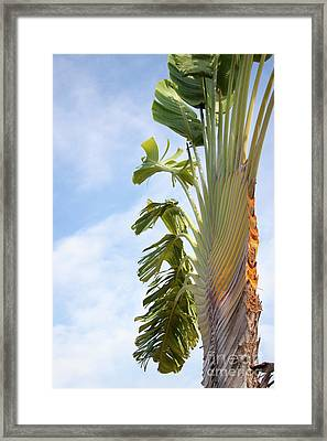 A Slice Of Nature Framed Print