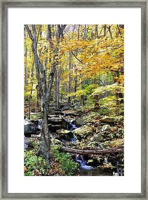 A Smokey Mountain Stream  Framed Print by Brittany H