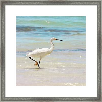A Snowy Egret (egretta Thula) At Mahoe Framed Print by John Edwards