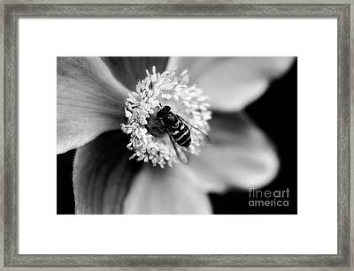 A Soft Place To Rest Framed Print by Venetta Archer