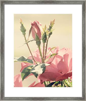 A Soft Sweet Note Framed Print by Amy Tyler