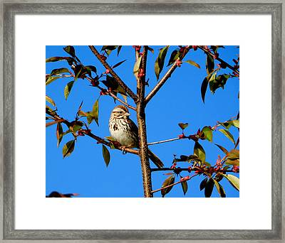 A Song In My Heart Framed Print