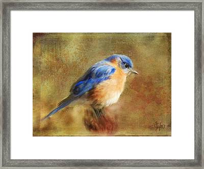 A Songbird In My Heart Framed Print by Colleen Taylor