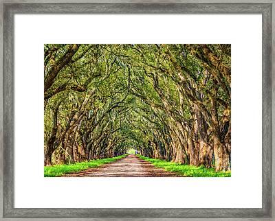 A Southern Lane 2 Framed Print by Steve Harrington