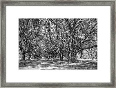 A Southern Lane 3 Bw Framed Print by Steve Harrington