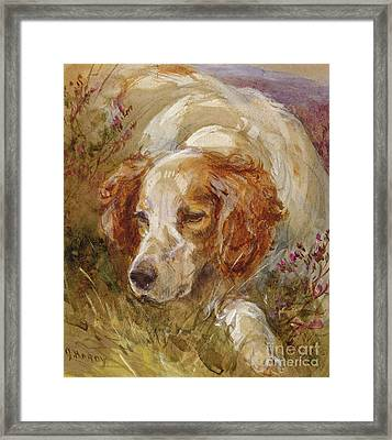A Spaniel Framed Print by James Hardy Junior