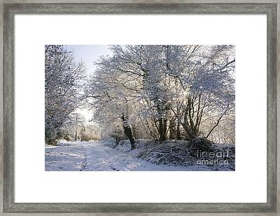 A Sparkling Winter Day Framed Print by Sophie De Roumanie