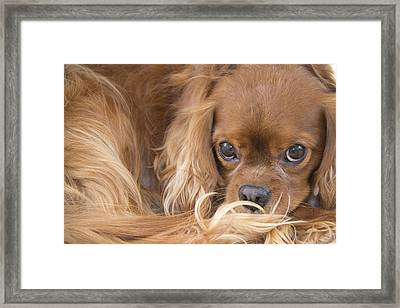A Special Friend Framed Print by Daphne Sampson