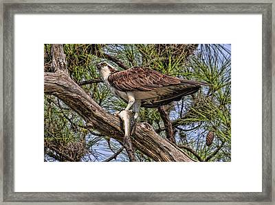 A Speckled Trout Breakfast Framed Print by HH Photography of Florida