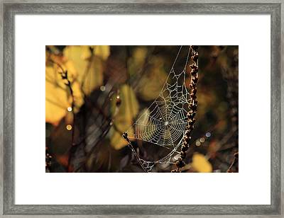 A Spiders Creation Framed Print by Karol Livote