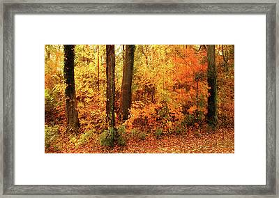 A Splash Of Autumn Framed Print