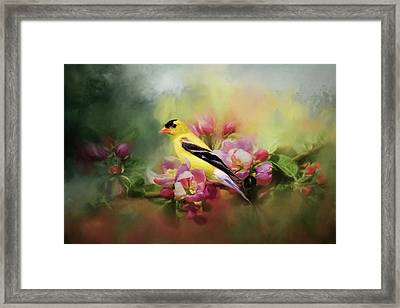 A Splash Of Joy Bird Art Framed Print