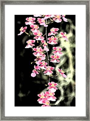A Splash Of Pink Framed Print by Nanette Hert
