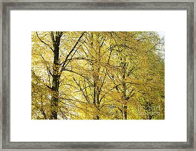 A Splash Of Yellow Framed Print by Tim Gainey