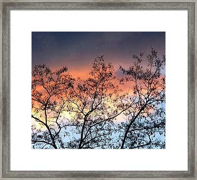 Framed Print featuring the photograph A Splendid Silhouette by Will Borden