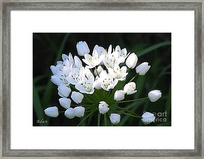 Framed Print featuring the photograph A Spray Of Wild Onions by Felipe Adan Lerma