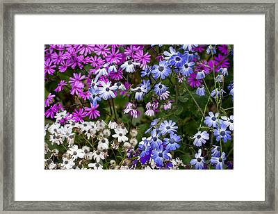 A Spring Gathering Framed Print by Karen LeGeyt