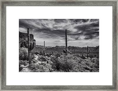 Framed Print featuring the photograph A Morning Hike In The Superstition In Black And White  by Saija Lehtonen