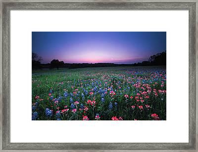 A Spring Night's Wildflower Dream - Texas Framed Print