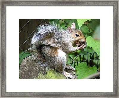 A Squirrelly Portrait Framed Print