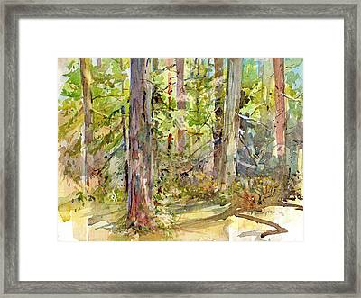 A Stand Of Trees Framed Print