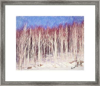 A Stand Of White Birch Trees In Winter. Framed Print