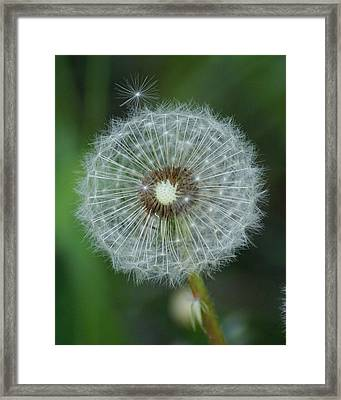 A Star Leaves Home Framed Print by Ben Upham III