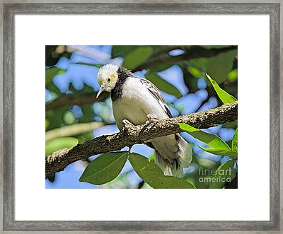 A Starling To Remember Framed Print