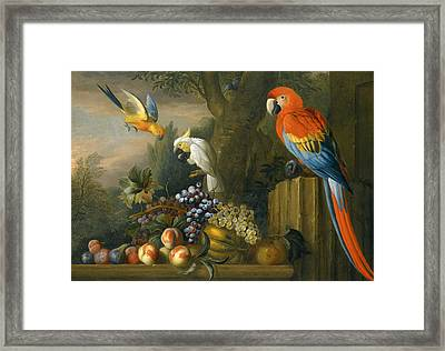 A Still Life With Fruit Parrots And A Cockatoo Framed Print