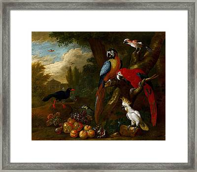 A Still Life With Fruit Parrots Framed Print