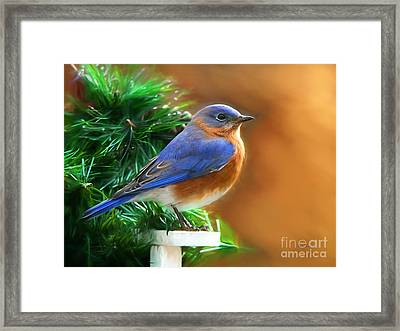 A Still Moment Framed Print by Tina LeCour