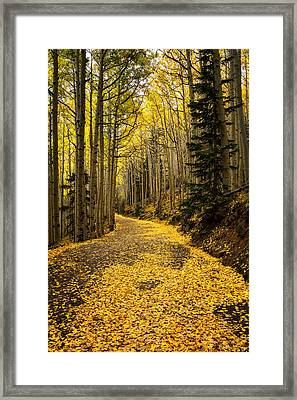 A Stroll Among The Golden Aspens  Framed Print