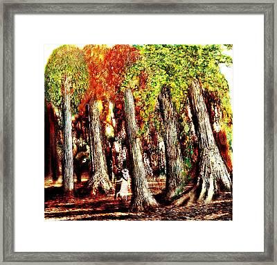 A Stroll Through The Woods Framed Print by Mark Conrad
