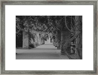 A Stroll Under The Vines Bw Framed Print