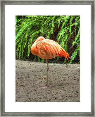 A Study In Pink Framed Print by Michael Garyet