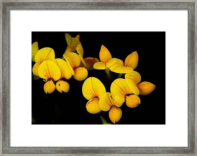 A Study In Yellow Framed Print by David Lane