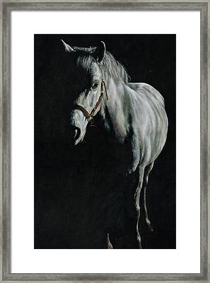 A Study Of A Pony In The Shadows Framed Print