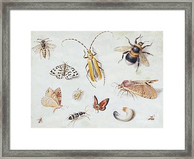 A Study Of Butterflies And Other Insects Framed Print